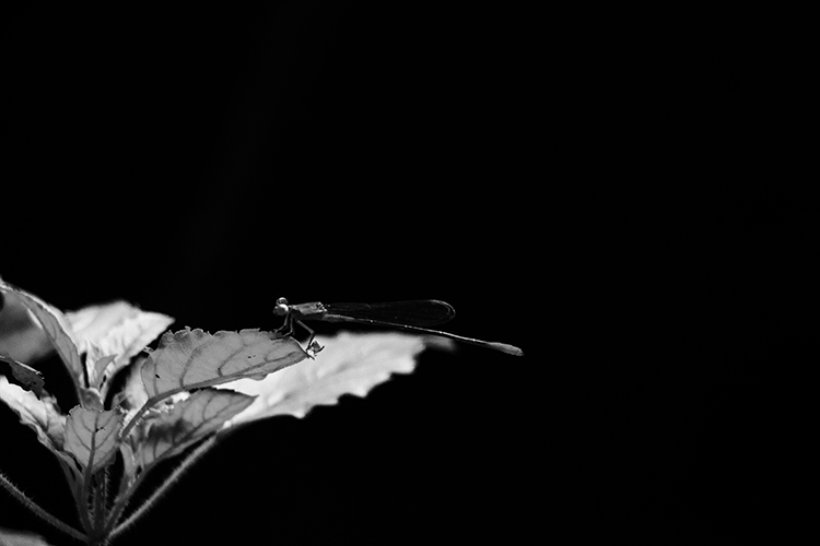 Dragonfly - Godwin Angeline Benjo, Unsplash_reduced